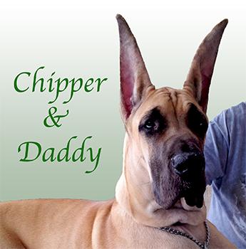 chipper305x350